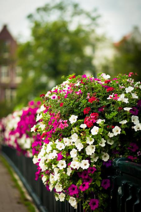 Flowers on a bridge